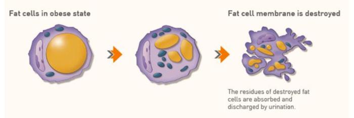 脂肪溶解注射の成分